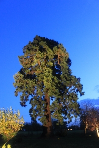 tree2 200x300 - Garden Lighting Gallery